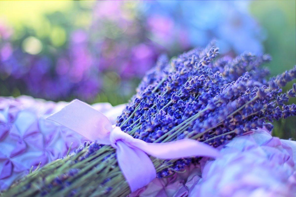 Beneficios de la aromaterapia y mejores ambientadores - iunatural